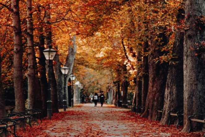 Herbstvibes aus der Bonner Südstadt von der schönen Poppelsdorfer Allee